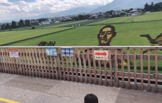 田んぼアートを見る男児